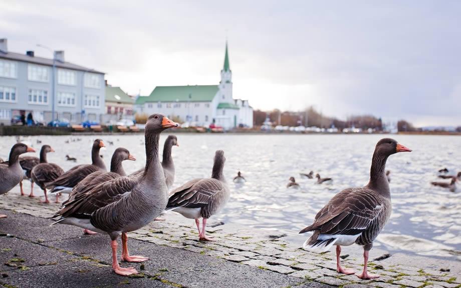 lago di Tjornin in Reykjavik