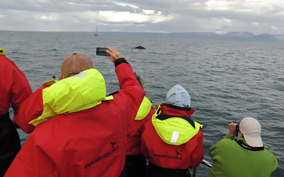 whale watching a Husavik