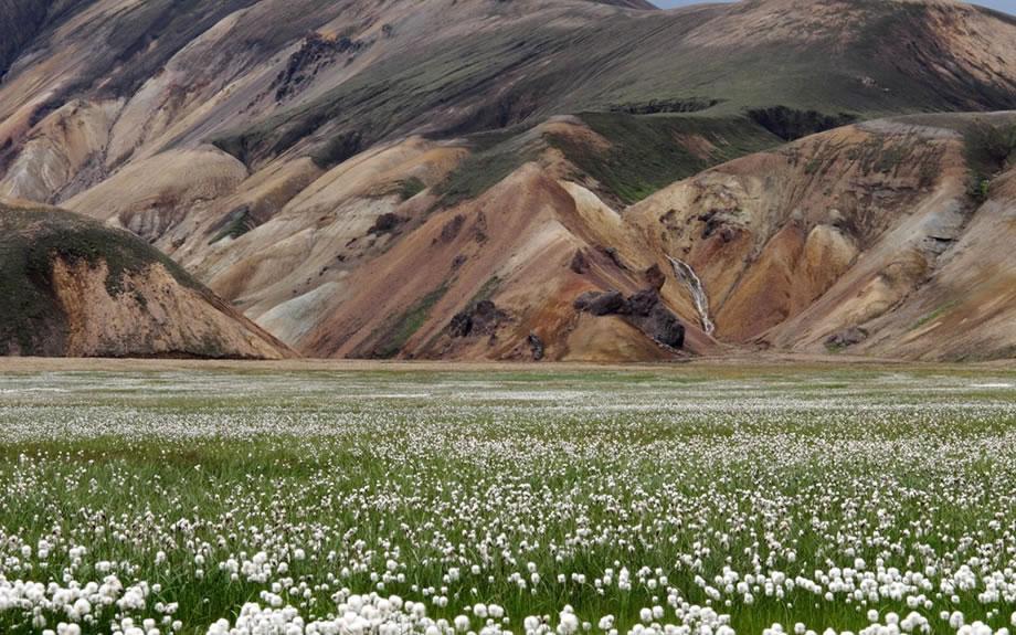 paesaggio fiorito del Landmannalaugar