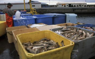 Pescato - foto di M. Conforti